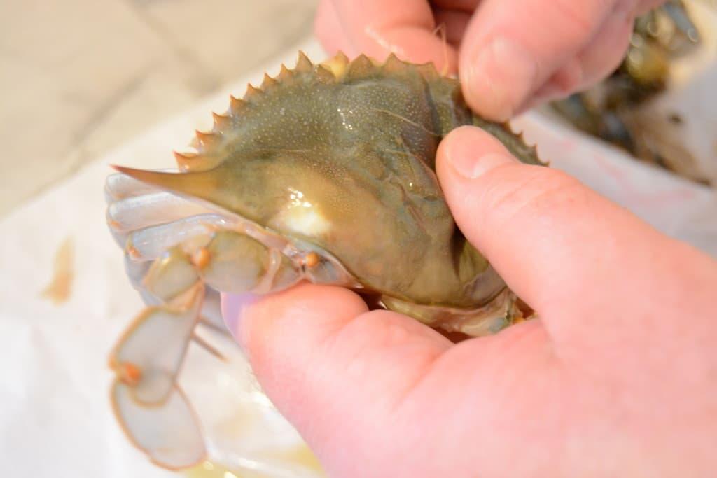 spft shel crab beard
