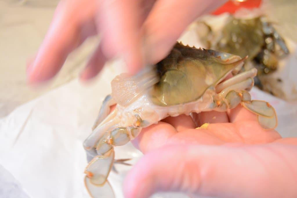 soft shel crab lung